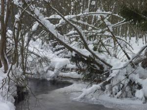 Winter am Saussbach Schneeschuh