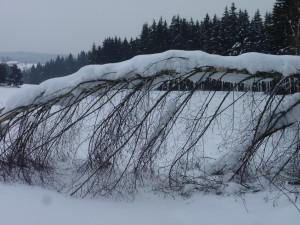 Winter am Saussbach