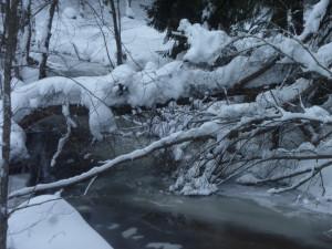Eisiger Saussbach im Winter