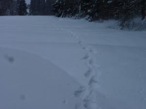 Mit Schneeschuhen unterwegs