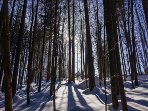 Winterwandern in Bayern
