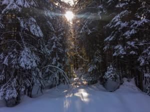 Winterwald in Bayern