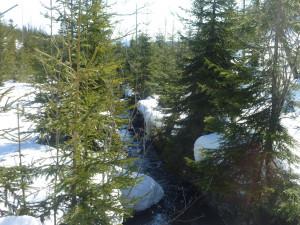 Wanderung zum Siebensteinkopf im Winter
