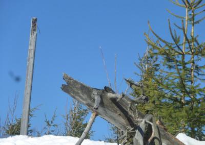 """Der """"Wolfsstamm"""" auf dem Siebensteinkopf"""