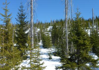 Schneeschuhwanderung Siebensteinkopf