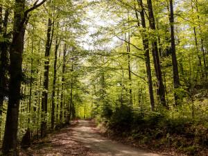 Frühlingshafter Wald in Bayern