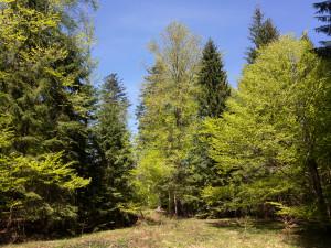 Frühling Nationalpark Bayerischer Wald