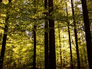Frühlingswald in Bayern