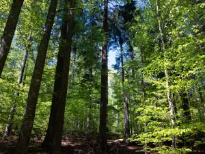 Frühling im Bayerischen Wald