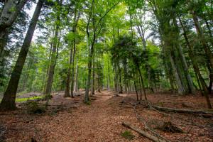 Wanderung zum Brotjacklriegel im Bayerischen Wald