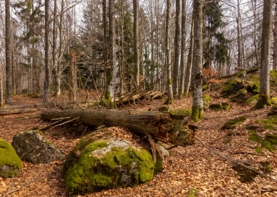 Wildnis im Bayerischen Wald