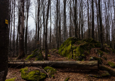 Waldwildnis im Nationalpark
