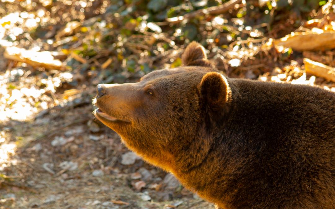 Bärige Erlebnisse im Tierfreigelände