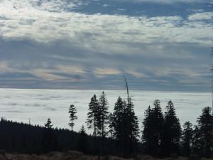 Nebelmeer Bayerischer Wald