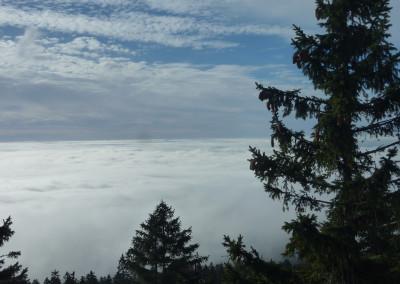 Nebelstimmung und Ausblick im Bayerwald